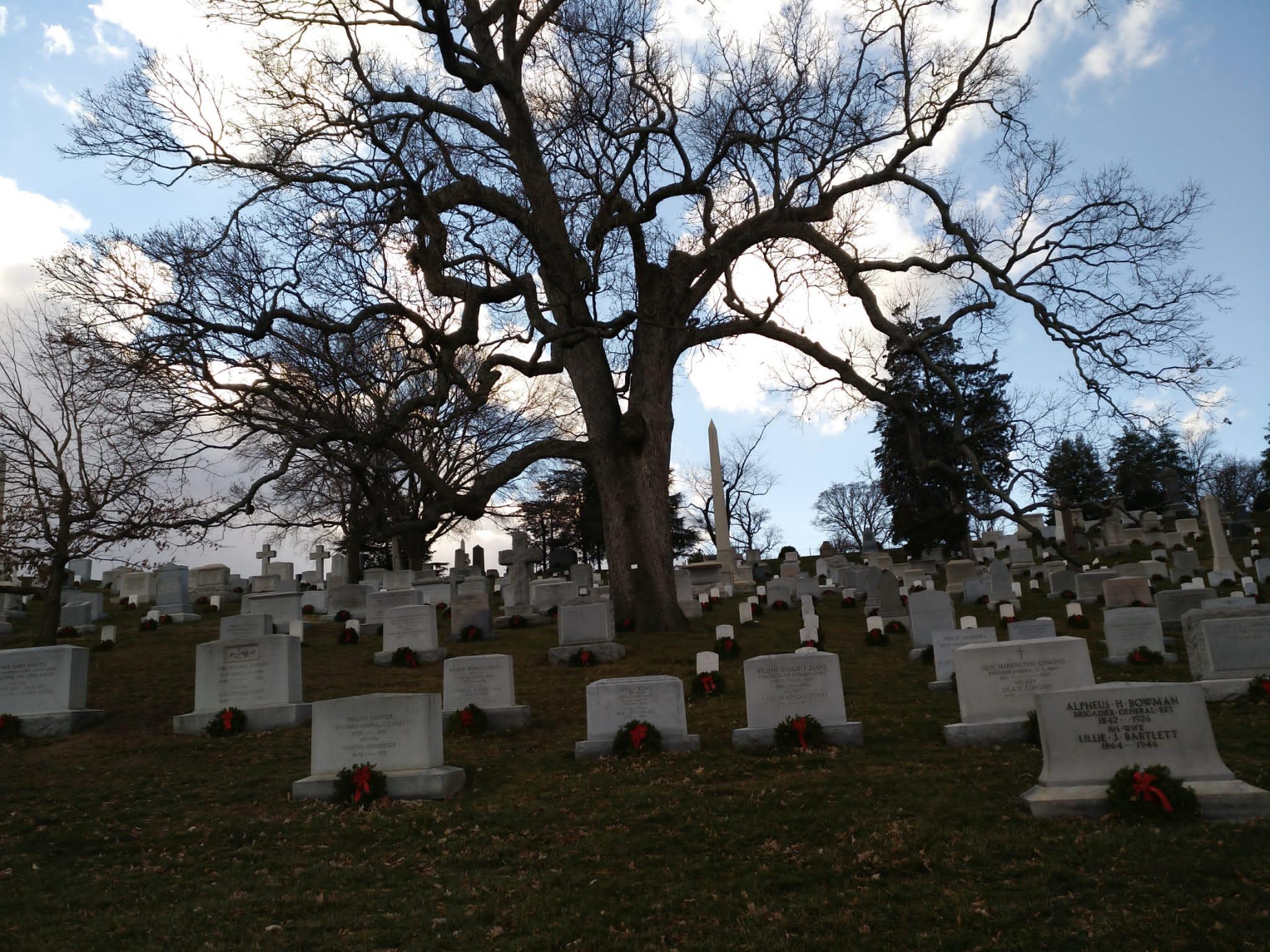 arlington - cementerio - tumbas - arbol