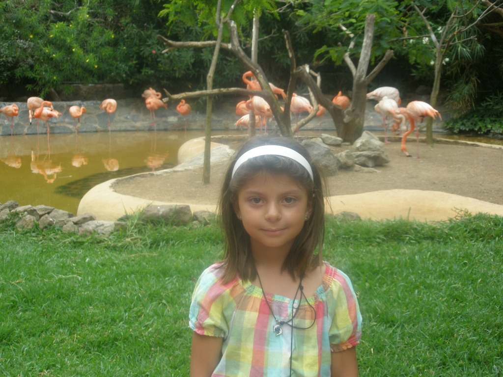 flamancos - jardín - lago - niña