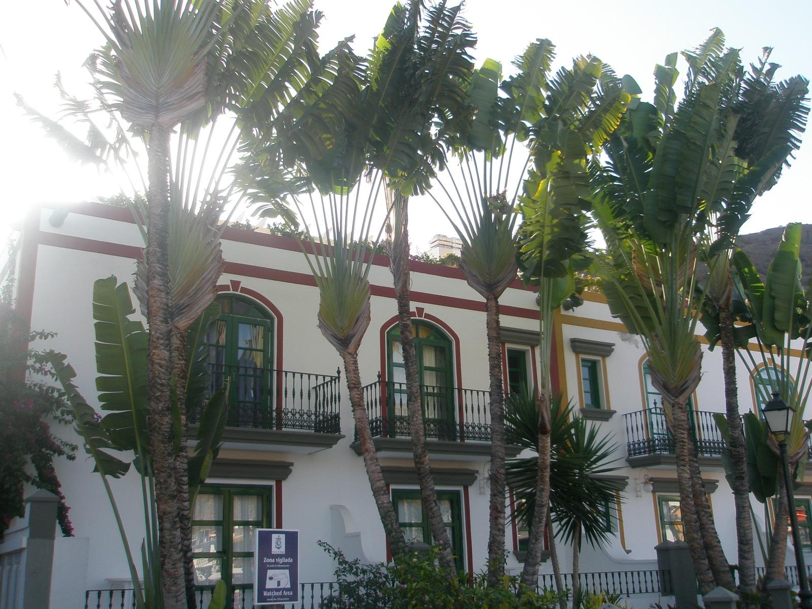 casa - palmeras - balcones - ventanas - calle