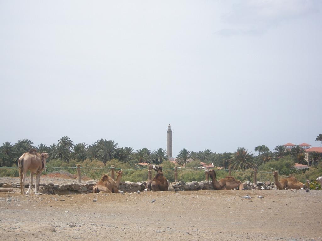 arena - desierto - camellos - faro